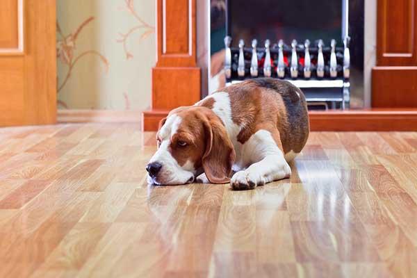 چه کفپوش سنگ طبیعی مناسب حیوانات خانگی است؟